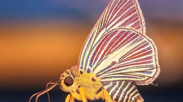 How-To-Get-Rid-Of-Moths-In-Oriental-Rugs-featured-image