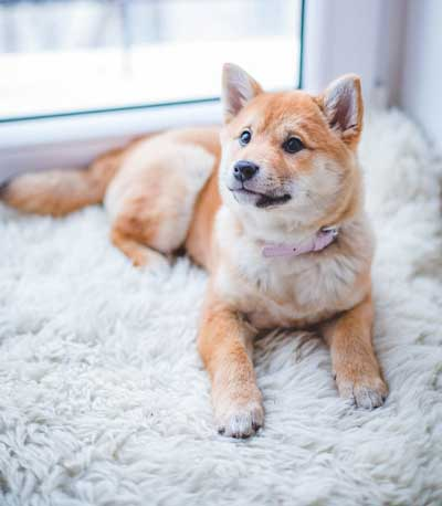 best-rugs-for-dogs-5