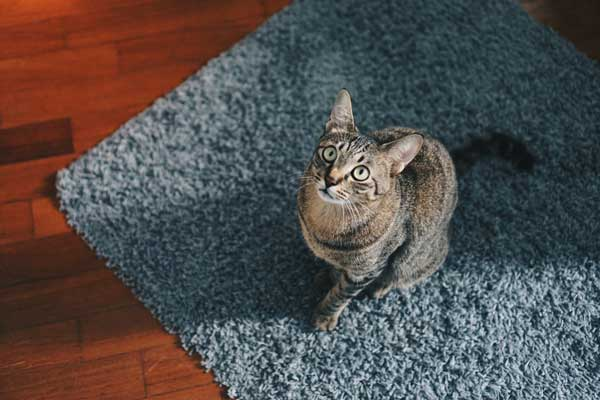How-to-keep-cats-from-peeing-on-rugs-1