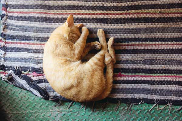 How-to-keep-cats-from-peeing-on-rugs-2