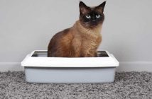 How-to-keep-cats-from-peeing-on-rugs-5