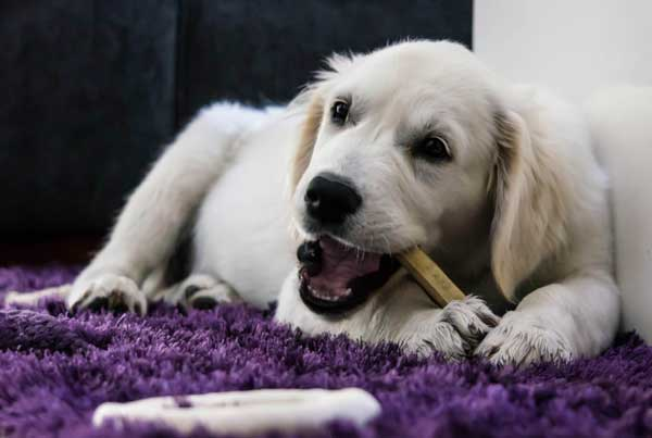 How-to-keep-dogs-from-peeing-on-rugs